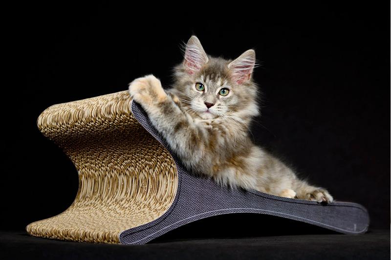 Kratzpappe für Katzen, Kratzbretter aus Pappe