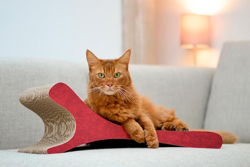 Kratzpappen für Katzen
