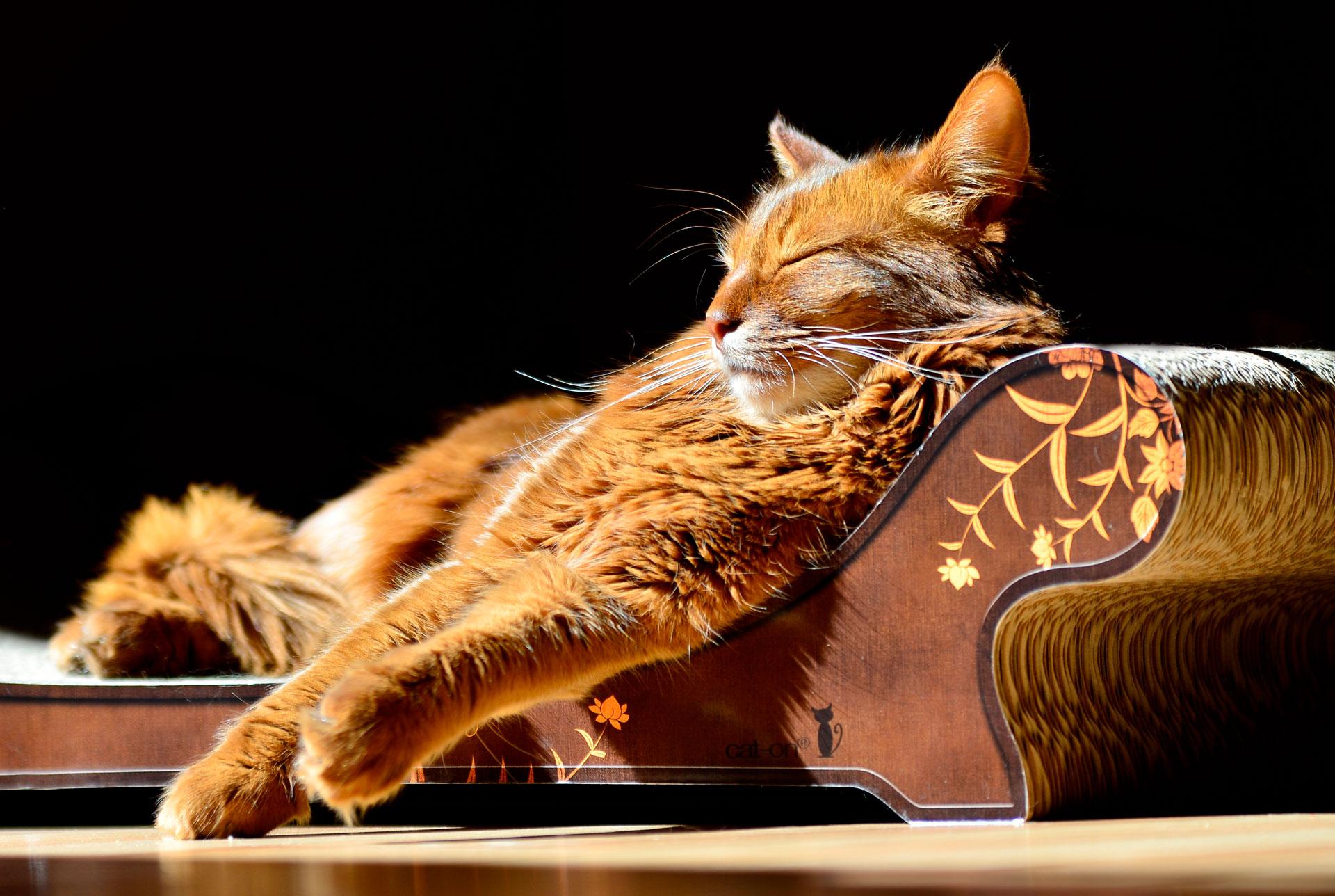 Katzensofa Le Canapé - ergonomisches Kratzbrett für Katzen aus Kratzpappe