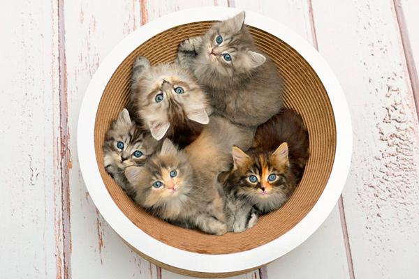 Katzenbett, Katzenschale, Kratzbrett La Coupe