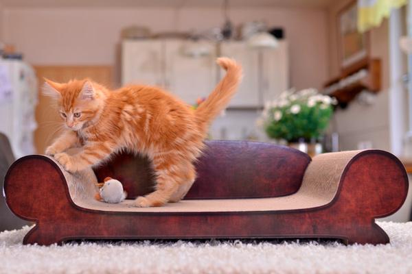 Katzenbett, Kratzpappe für Katzen