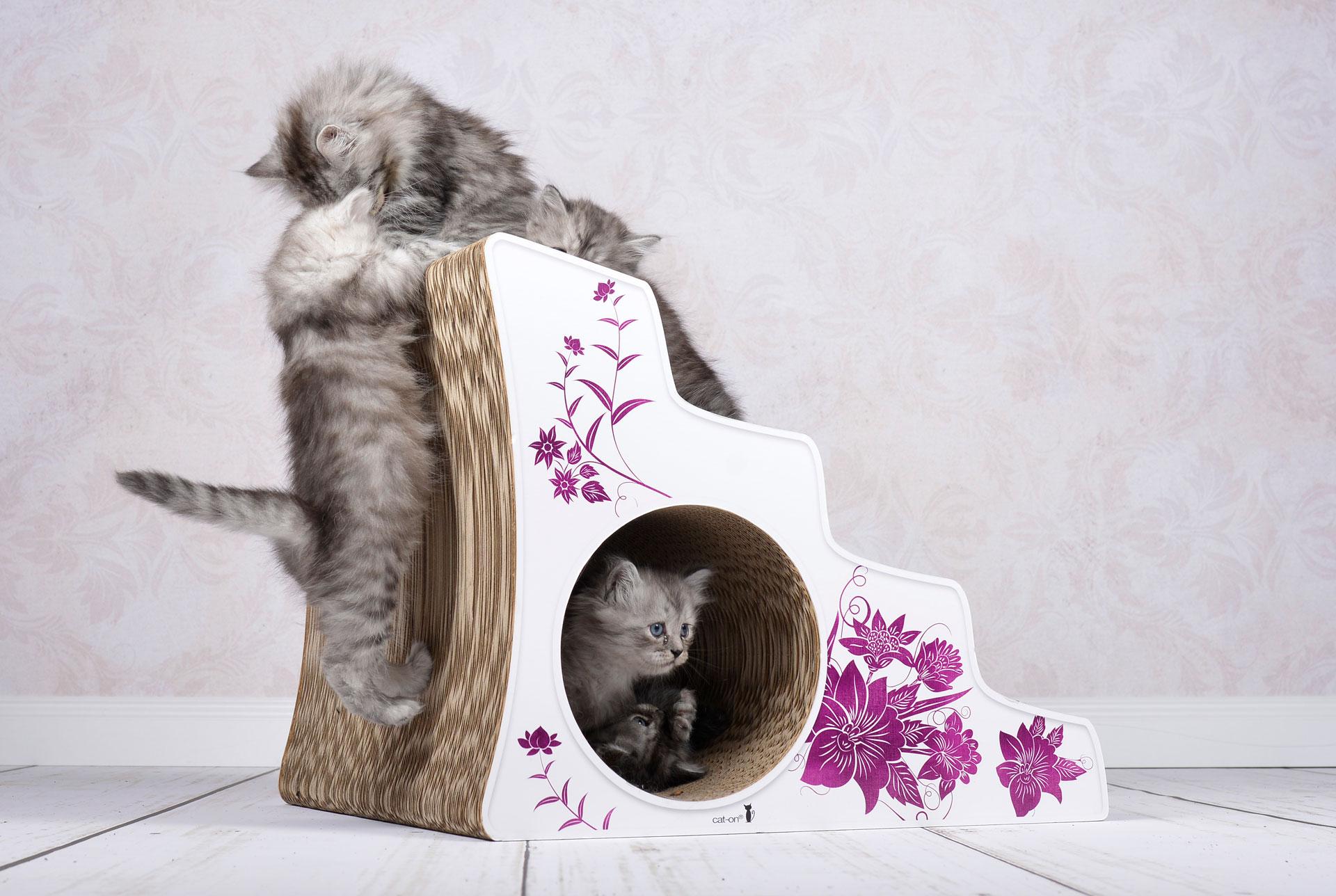 Treppe für Ataxiekatzen |Ataxietreppe cat-on Lescalier