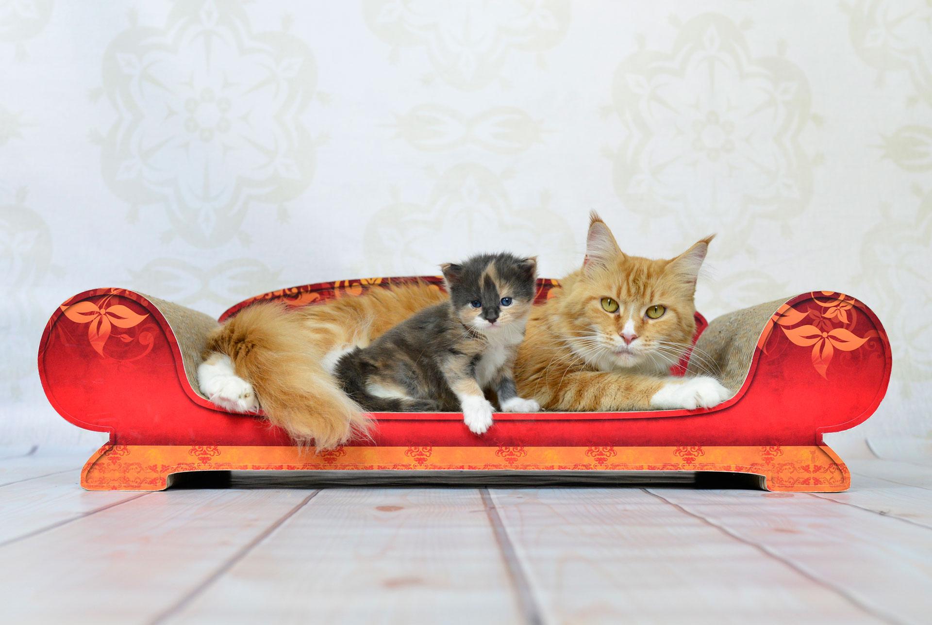 Kratzpappe für Katzen |Katzensofa & Divan Vertige